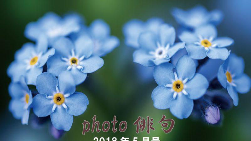 Photo俳句2018年5月号